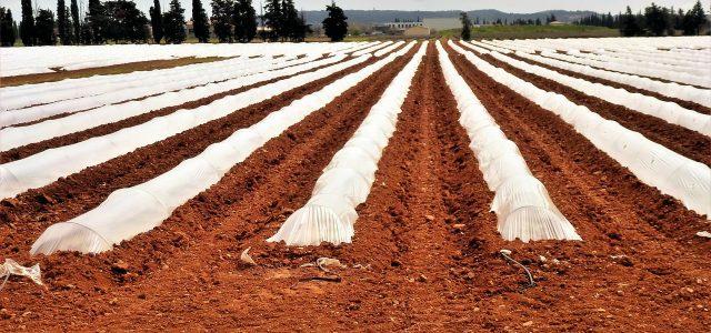 Découvrez les 8 branches de l'agroalimentaire