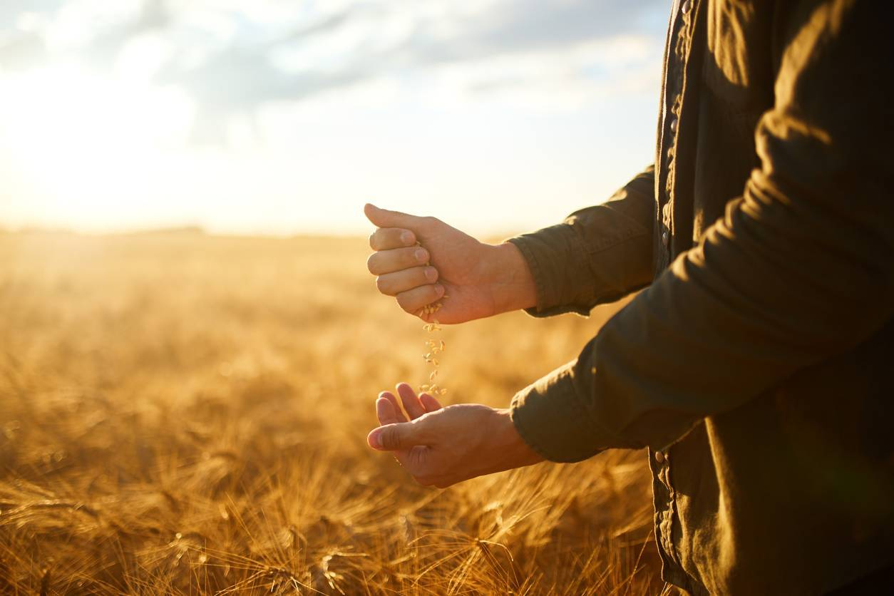 assurance agriculteur